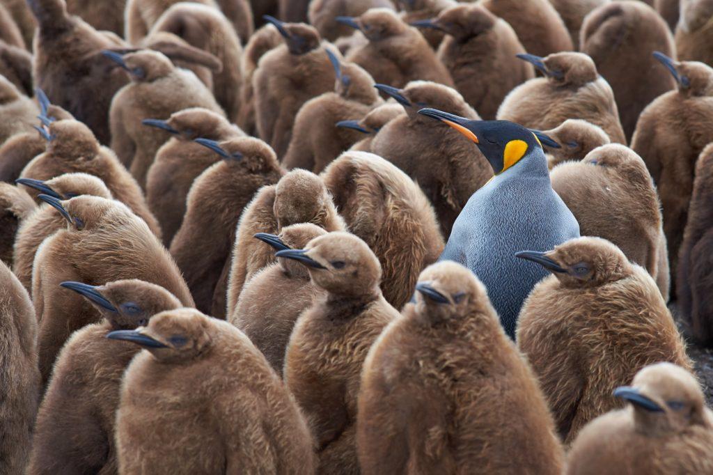 erottaudu_joukosta_pingviini
